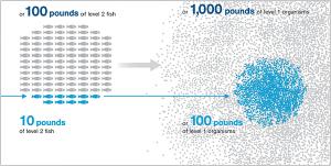 grid_image-seafoodprint
